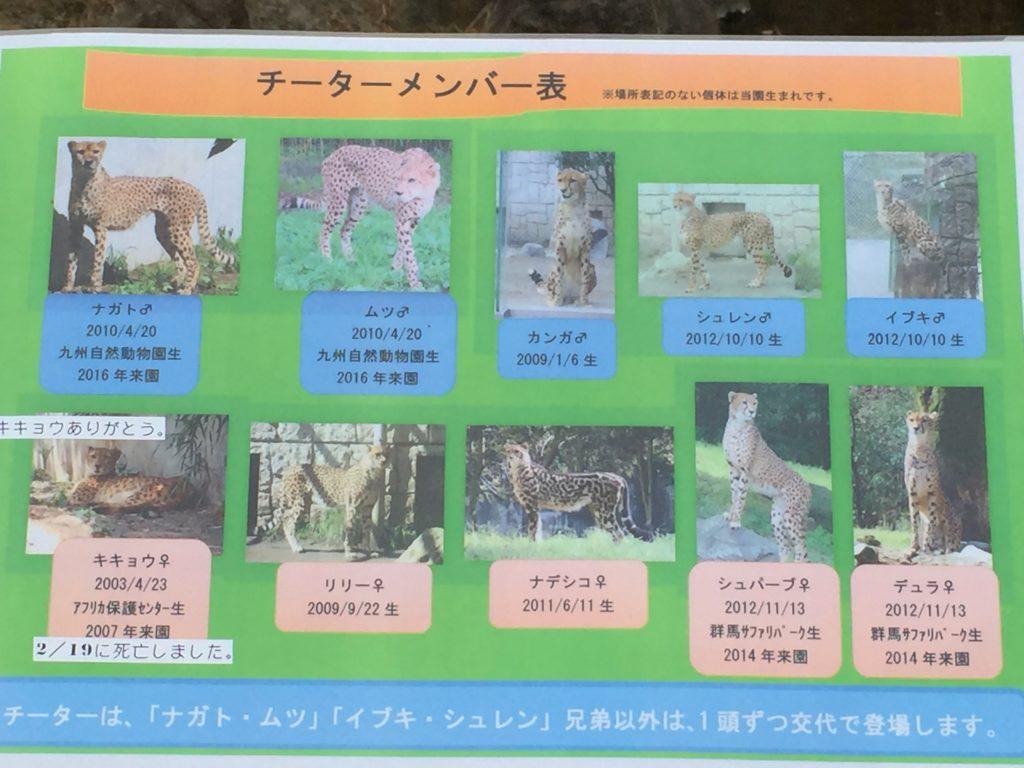 多摩動物園のチーター