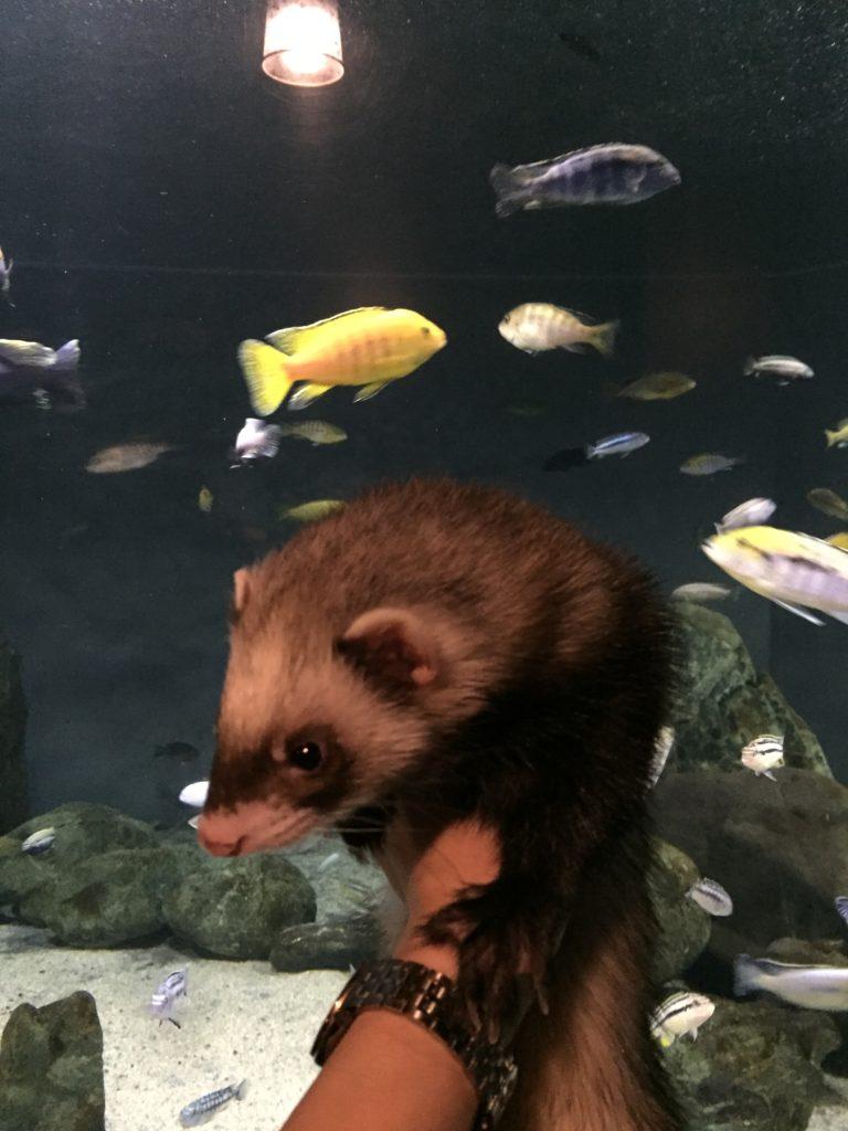 蓼科アミューズメント水族館のカラフルな魚