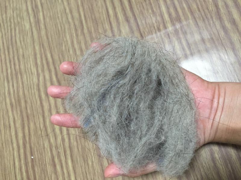 フェレットの換毛