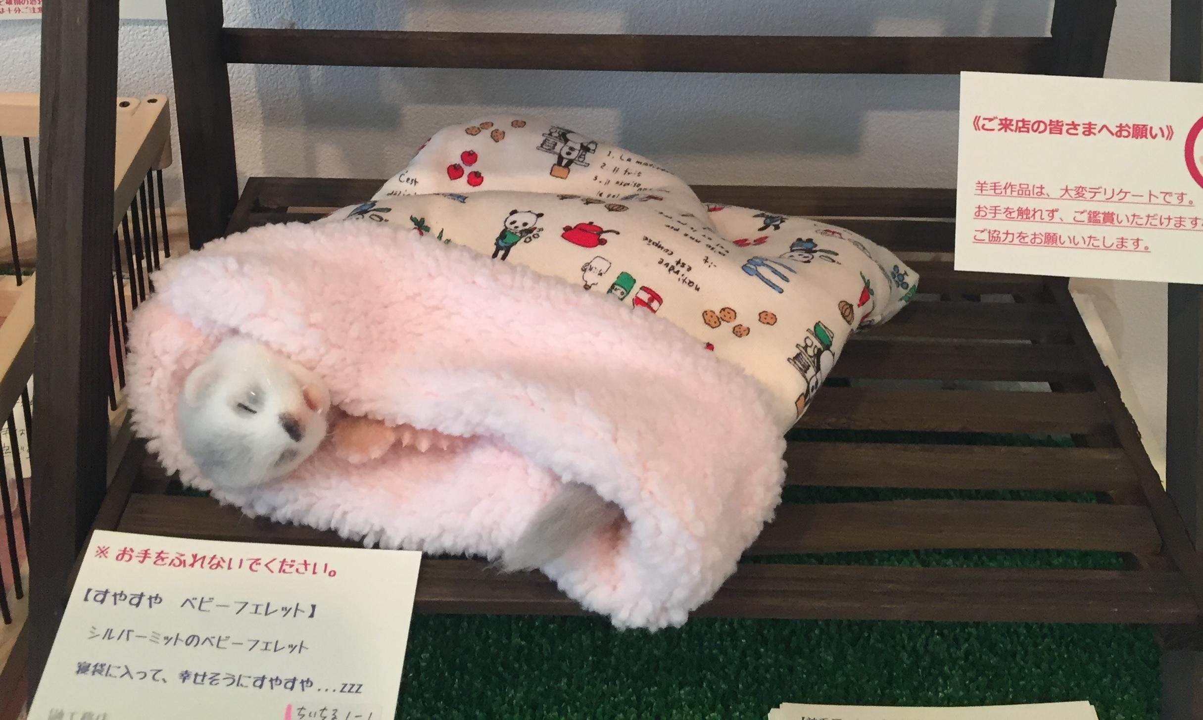 鼬工務店の羊毛フェレット