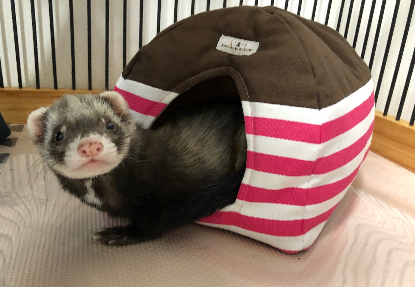 フェレットのドーム型ベッド